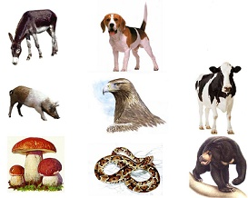 Ejemplos de animales omnivoros