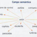 Ejemplos de campo semántico