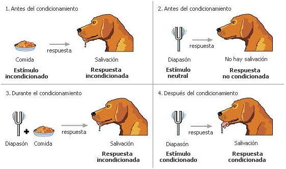 Ejemplos de aprendizaje asociativo