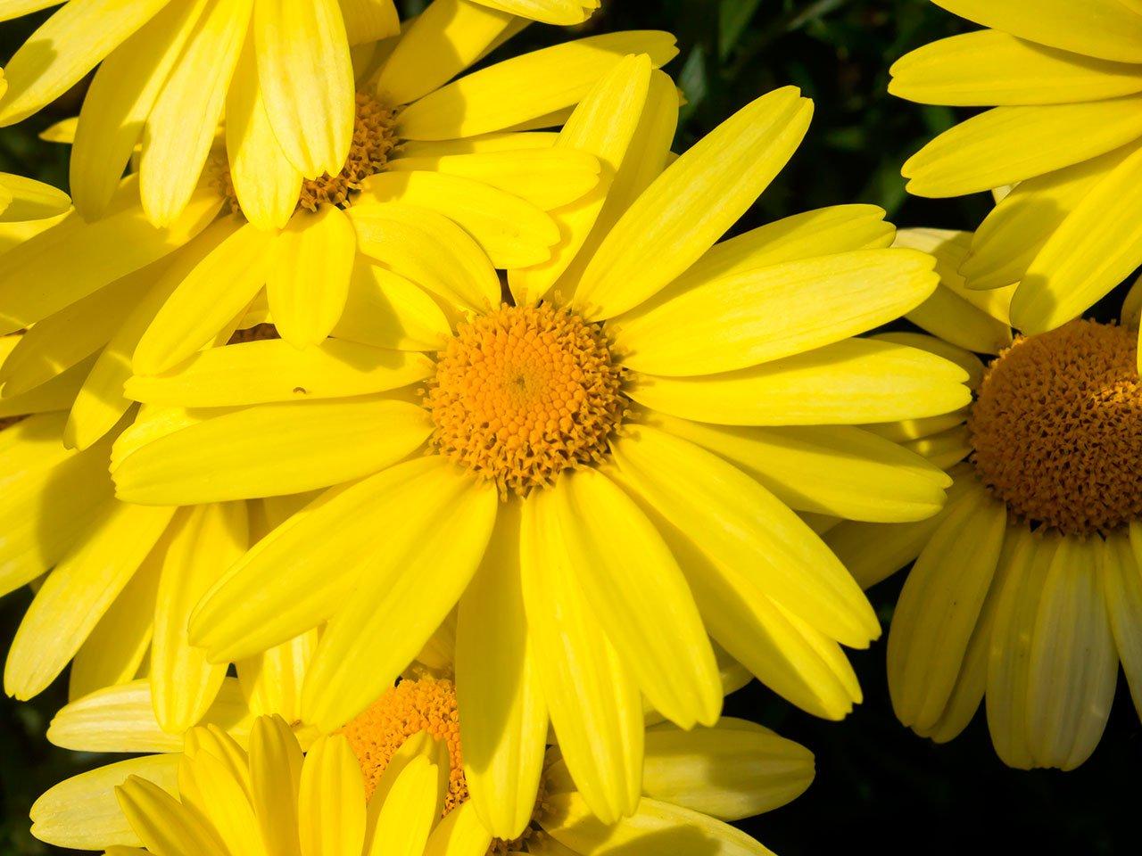 Ejemplos de plantas medicinales for Que son plantas ornamentales ejemplos