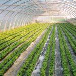 Ejemplos de cultivos hidropónicos