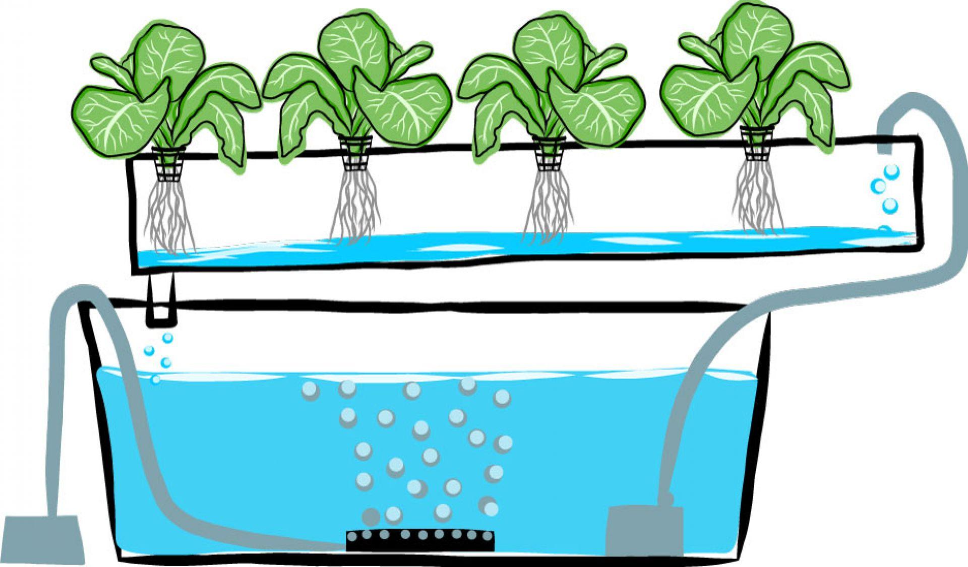 Ejemplos de cultivos hidrop nicos for Imagenes de hidroponia