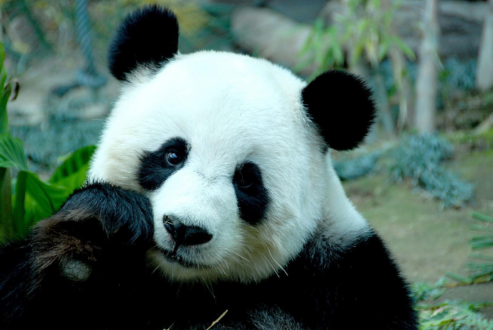 En Peligro De Extinción: Ejemplos De Animales En Peligro De Extinción