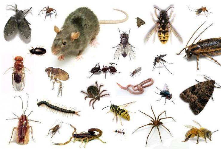 Ejemplos de plagas - Insectos en casa fotos ...