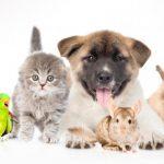 Ejemplos de cuidados a una mascota