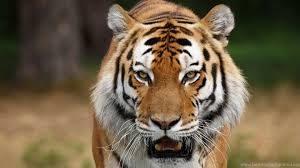 Ejemplos de animales depredadores