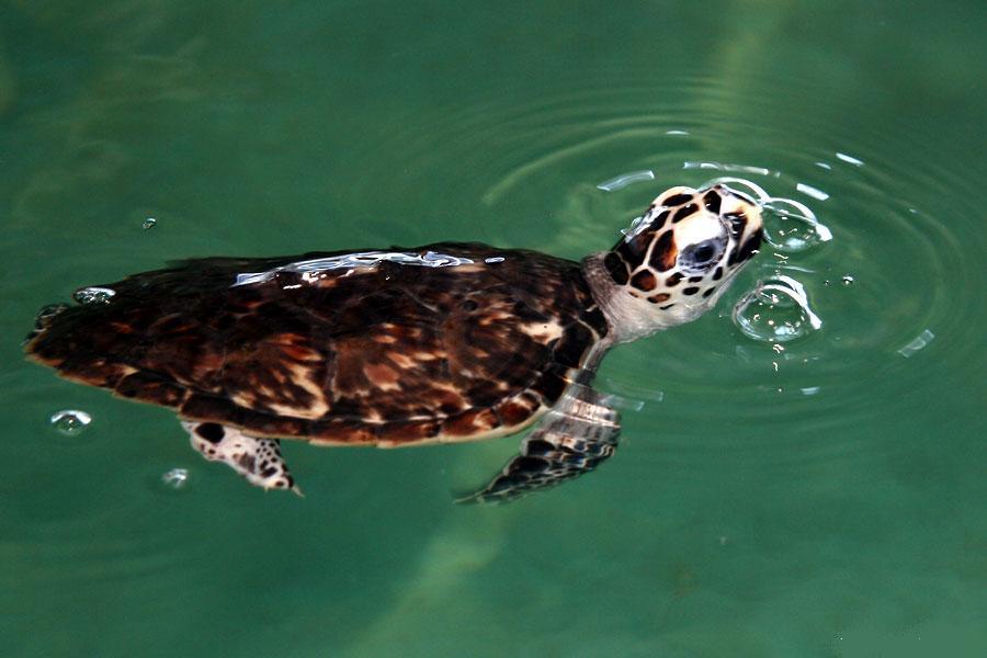 Ejemplos de tortugas